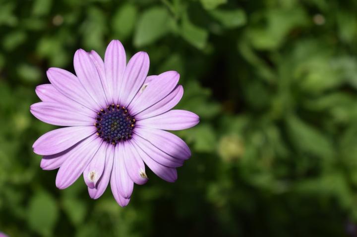 Epcot Flower & GardenFestival